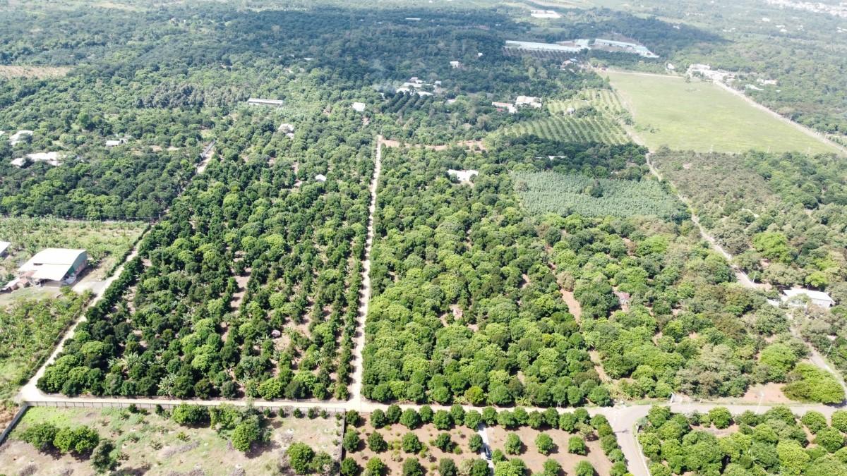 Mình cần bán mãnh vườn cây ăn trái 1000m2 ngay Ngã Tư Dầu Giây .