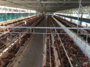 Cần cho thuê trang trại nuôi gà siêu trứng tại Đắk Lắk