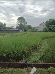 Chính chủ cần bán lô đất tại Khu 4 - Xã Mỹ Lung - Huyện Yên Lập - Tỉnh Phú Thọ.