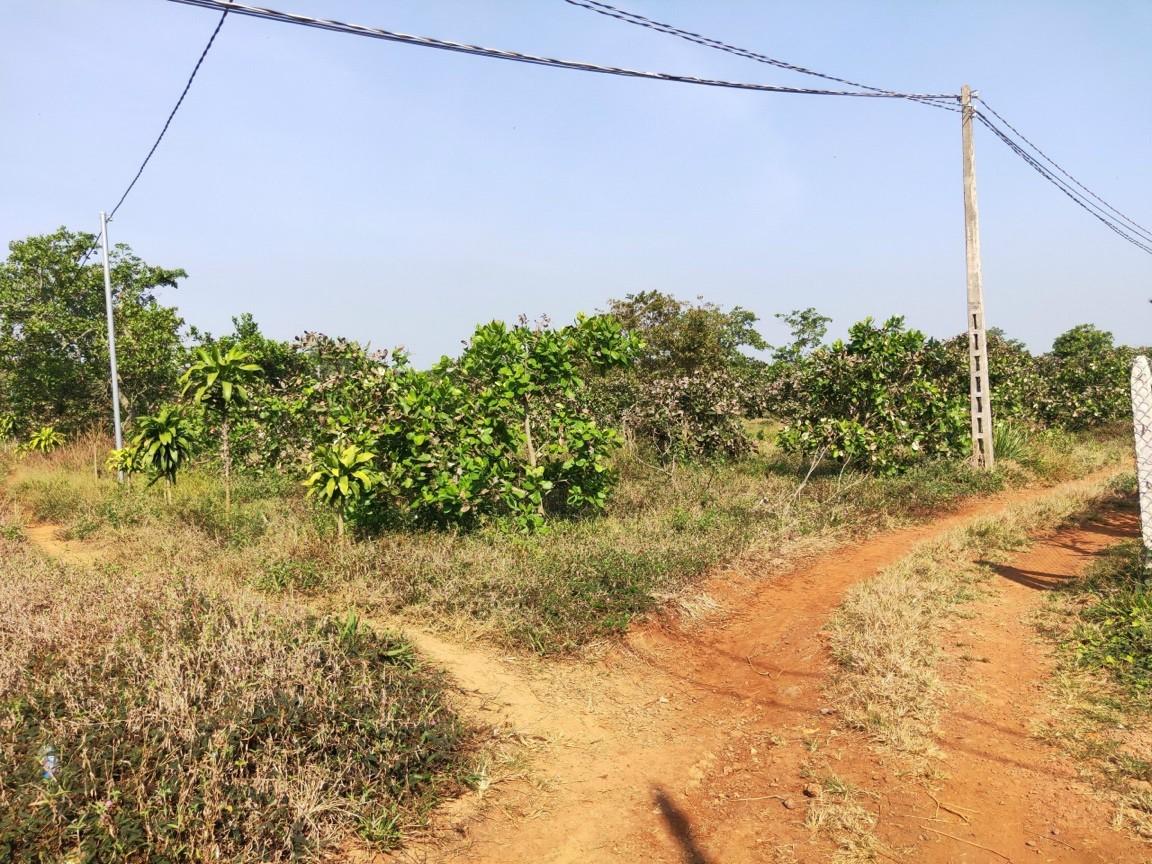 Cần Bán 9 Sào Đất Vườn Ấp Đồi Rìu Hàng Gòn, Long Khánh,Đồng Nai.