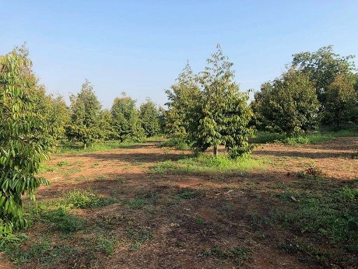 Cần tiền kinh doanh bán 10.000m2 đất trồng cây lâu năm, sổ riêng, hơn 30 tỷ, 0356448333