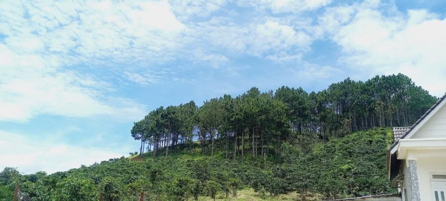 Đất vùng ven Đà Lạt- Lâm Hà- Lâm Đồng