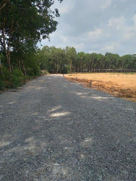 Bán đất Vĩnh Tân giá rẻ, rẻ nhất khu vực, cạnh trường lái Vĩnh Tân, Bình Dương.
