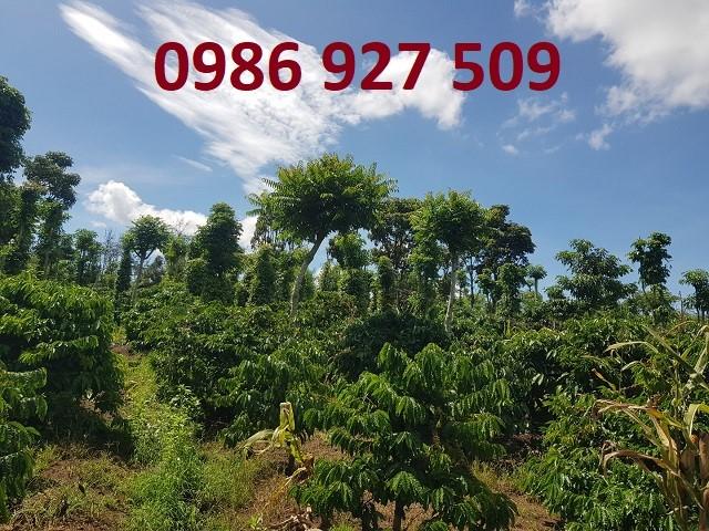 Bán 6 sào đất vị trí đẹp tại Xã Eakiet, Cư M'gar, Đắk Lắk, 390tr; 0986927509