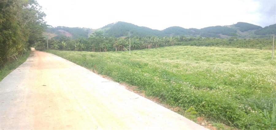 Bán lô đất 518m2 Giá 690 Triệu Đông Thanh, Lâm Hà, Cách Đà Lạt 21km